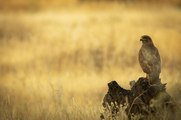Vogel auf einem feld