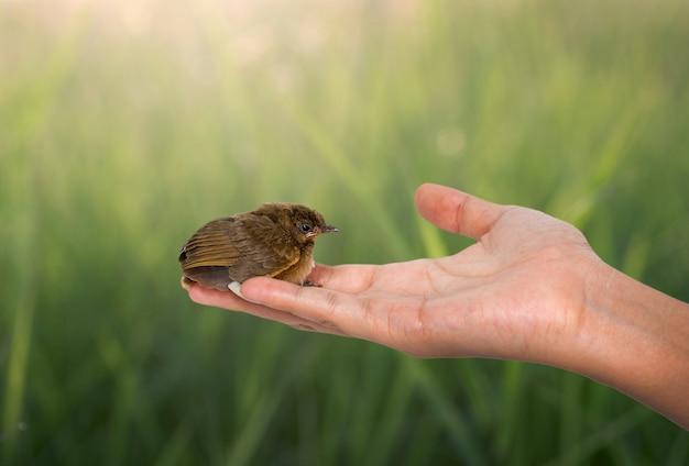 Vogel auf einer frauenhand