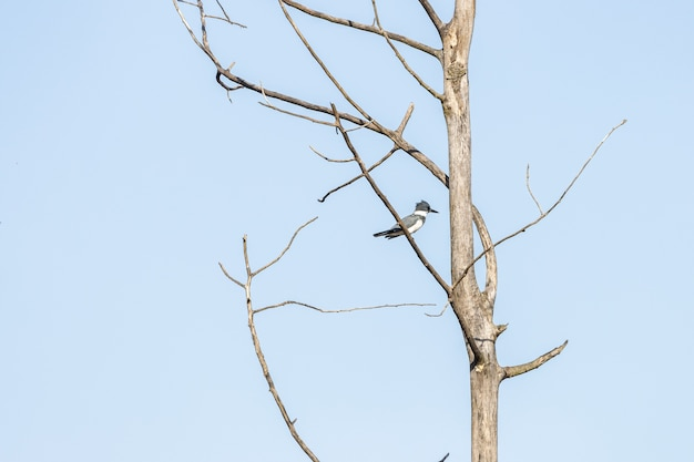 Vogel, der auf dem ast mit einem blauen himmel im hintergrund steht