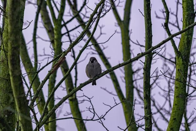 Vogel, der auf dem ast während der morgendämmerung sitzt
