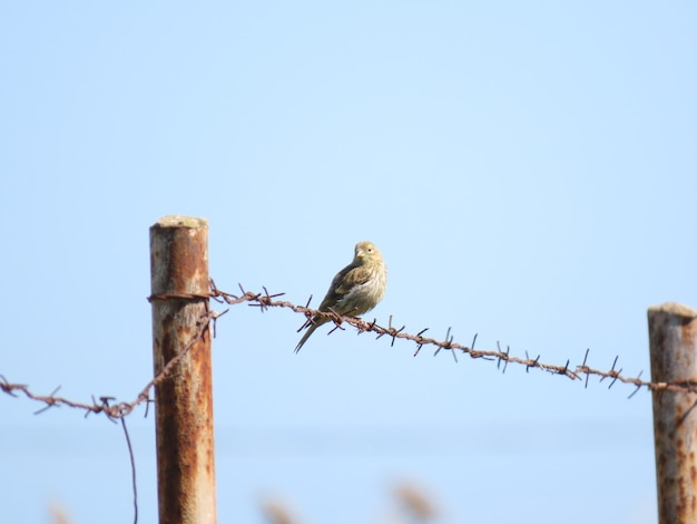 Vogel, der auf einem draht mit einem blauen himmel steht