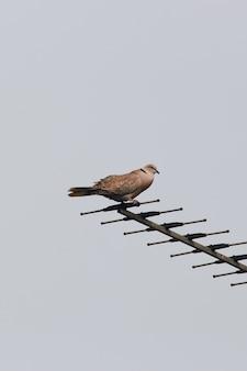 Vogel, der auf einer antenne mit einem grauen himmel auf dem hintergrund sitzt