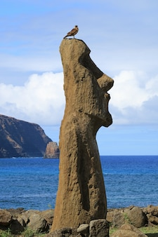 Vogel, der auf moai-kopf mit dem pazifischen ozean auf dem hintergrund, ahu tongariki, osterinsel, chile hockt
