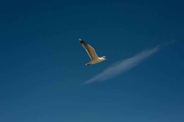 Vogel, der gegen helle weiße flauschige wolke auf einem blauen himmel fliegt. eine möwe am himmel fliegt ein vogel gegen den blauen himmel.