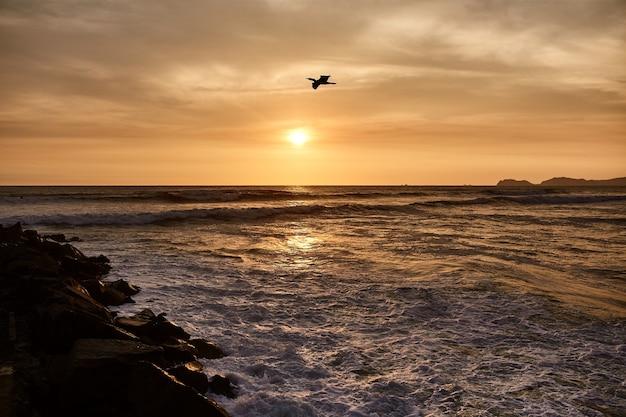 Vogel, der im meer während eines sonnenuntergangs fliegt
