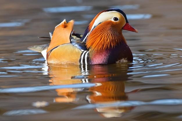 Vogel der nähe schwimmen
