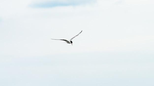Vogel fliegt in einen blauen himmel, anapa, russland.