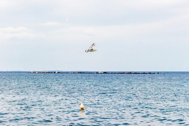 Vogel fliegt über das ruhige meer