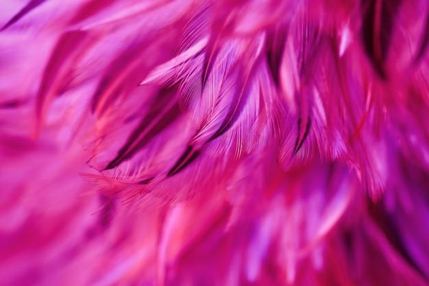 Vogel, hühnerfederbeschaffenheit für hintergrund, zusammenfassung, postkarte, unschärfeart, weiche farbe des kunstdesigns trend der mode 2019.