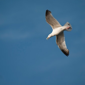 Vogel im flug am lake of the woods, ontario