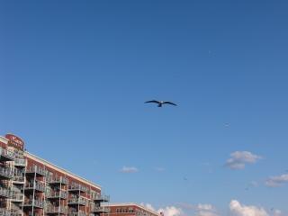 Vogel im flug, möwe