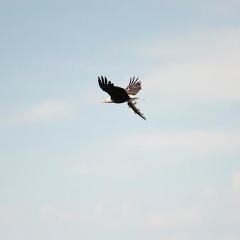 Vogel im flug über lake of the woods, ontario