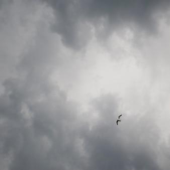 Vogel im flug und sturmwolken über lake of the woods, ontario