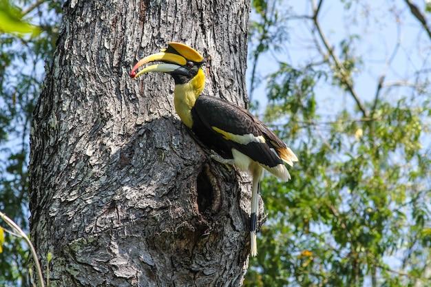 Vogel in der natur