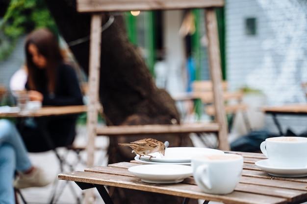 Vogel in der stadt. spatz sitzt auf tisch im straßencafé