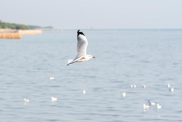 Vogel (möwen), der am himmel an einem naturmeer fliegt