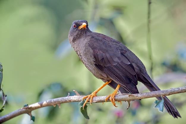 Vogel ruht sich leise auf einem ast aus
