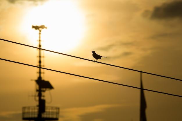 Vogel-silhouette auf dem draht