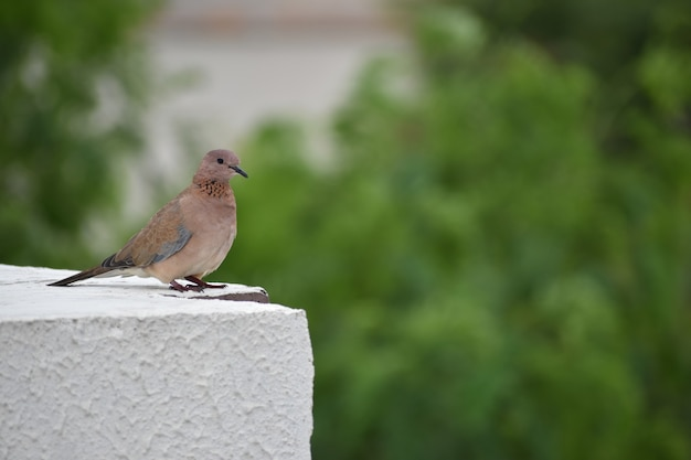 Vogel sitzt auf der terrasse