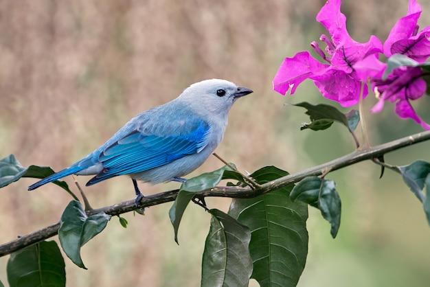 Vogel thront auf einem ast neben einer blume
