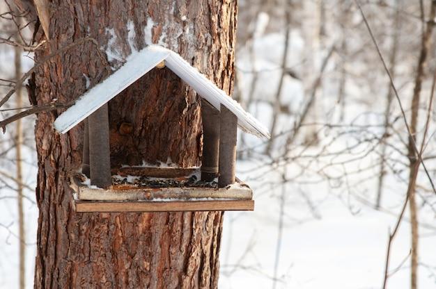 Vogel- und eichhörnchenfutterautomat im winterwald oder im park
