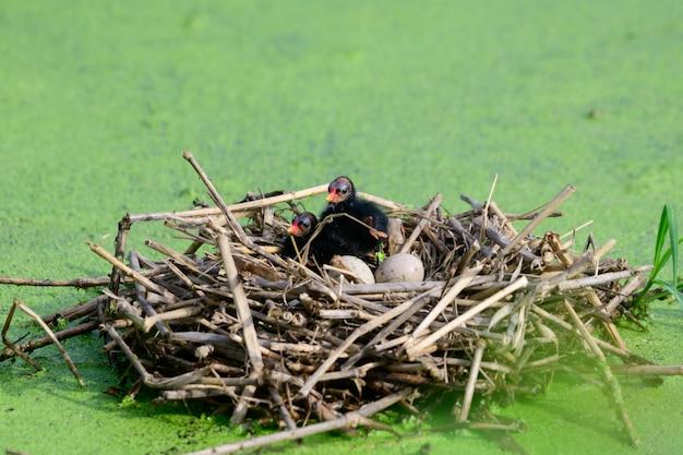 Vogelbaby im nest