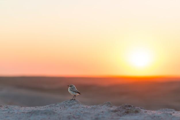Vogelbeobachtung in afrika, bunter sonnenuntergang, wüstenlandschaft, namibia.