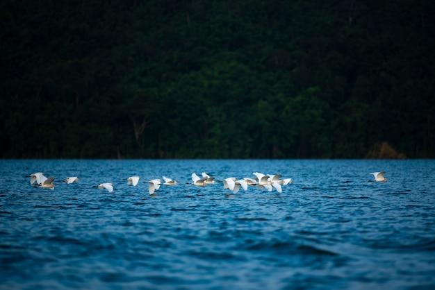 Vogelfamilie, die über den see fliegt