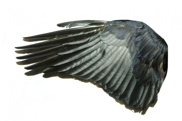 Vogelflügel auf weiß