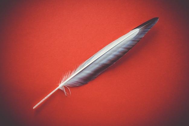 Vogelflügelfeder auf rotem hintergrund isoliert