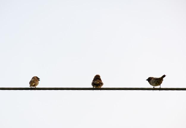 Vogelgriff auf draht