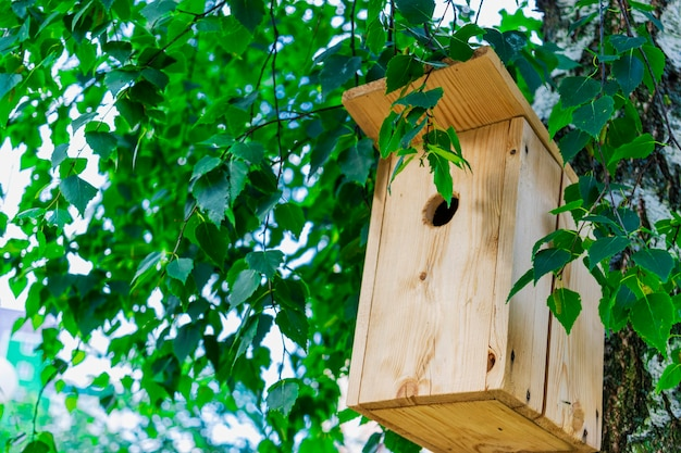 Vogelhaus auf einem baum in der nähe für vögel und die umwelt sorgen futterhäuschen für vögel unterstützung für vögel
