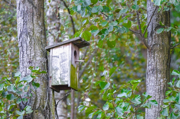 Vogelhaus aus holz auf einem baum. holzvogelhaus auf dem baum, nahaufnahme. holzvogelhaus auf dem baum im öffentlichen park