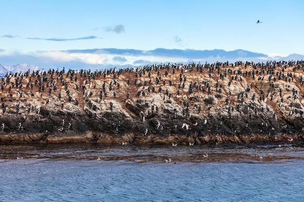 Vogelinsel in der nähe von ushuaia