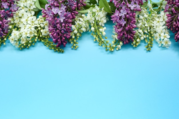Vogelkirschblumen und flieder auf blau