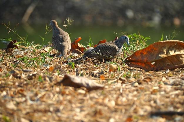 Vogelpaar auf getrockneten blättern im sommer schönen natur hintergrund gemahlen