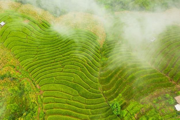 Vogelperspektive der grünen terassenförmig angelegten reisfelder gestalten unterschiedliches muster am morgen im nordthailand landschaftlich