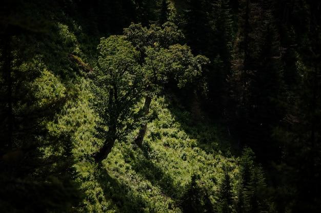 Vogelperspektive des feldes bedeckt mit grünem gras und wenigen immergrünen bäumen