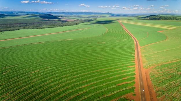Vogelperspektive des zuckerrohrplantagenfeldes mit sonnenlicht. landwirtschaftliche industrie.