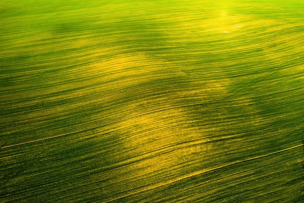 Vogelperspektive eines grünen feldes. aussaatkampagne in weißrussland. natur von weißrussland. eigenes grünes feld bei sonnenuntergang.