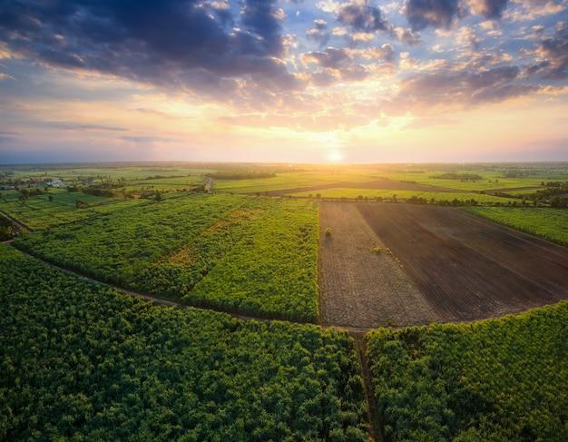 Vogelperspektive vom drohne zuckerrohrfeld mit sonnenunterganghimmelnatur-landschaftshintergrund.