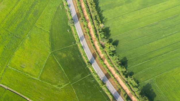 Vogelperspektive von grünen reisfeldern mit straße in thailand