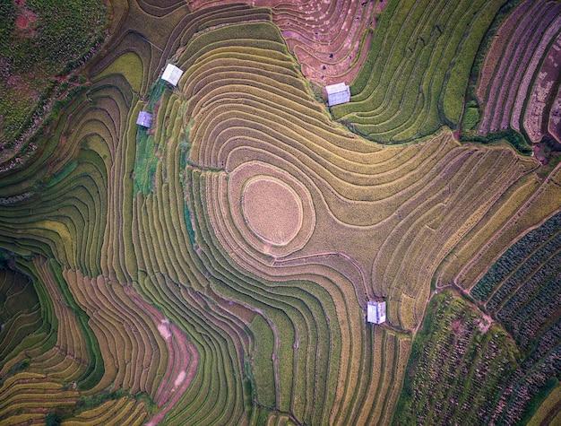Vogelperspektive von reisfeldern auf terassenförmig angelegtem von mu cang chai, yenbai, vietnam.