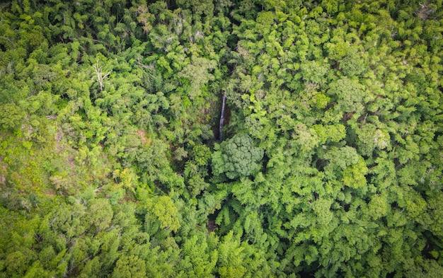 Vogelperspektive waldbaum umwelt natur hintergrund, wasserfall auf grünem wald draufsicht wasserstrom vom hügel von oben, kiefern- und bambuswald berghintergrund
