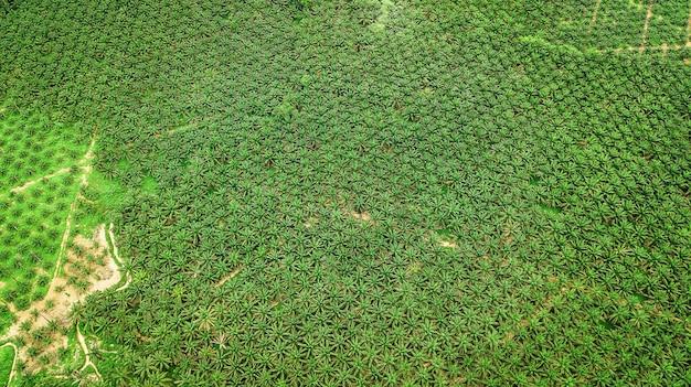 Vogelperspektivelandschaft der palme in krabi thailand