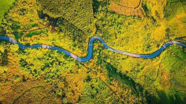 Vogelperspektivestraßenkurve auf dem berg in der herbstsaison am chiang rai thailand
