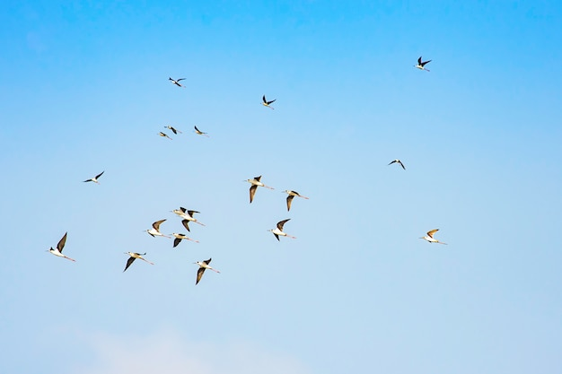 Vogelschwärme fliegen in den himmel.