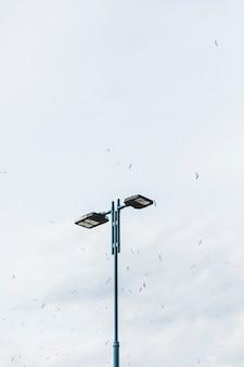 Vogelschwarm, der über die straßenlaterne gegen himmel fliegt