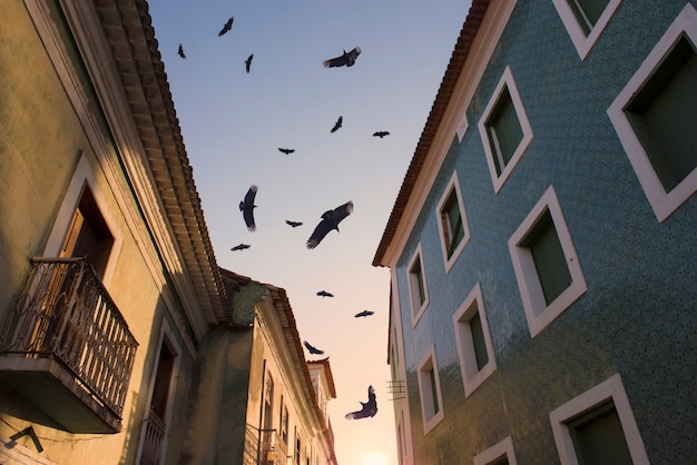 Vogelschwarm, der unter den kolonialhäusern der historischen mitte während des sonnenaufgangs fliegt