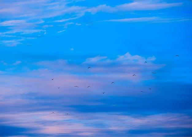 Vogelschwarm, der während des dramatischen sonnenuntergangs im hintergrund wandert